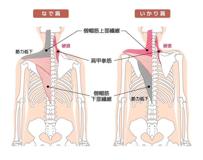 【肩こり解消法】タイプ別おすすめストレッチ&エクササイズをご紹介!